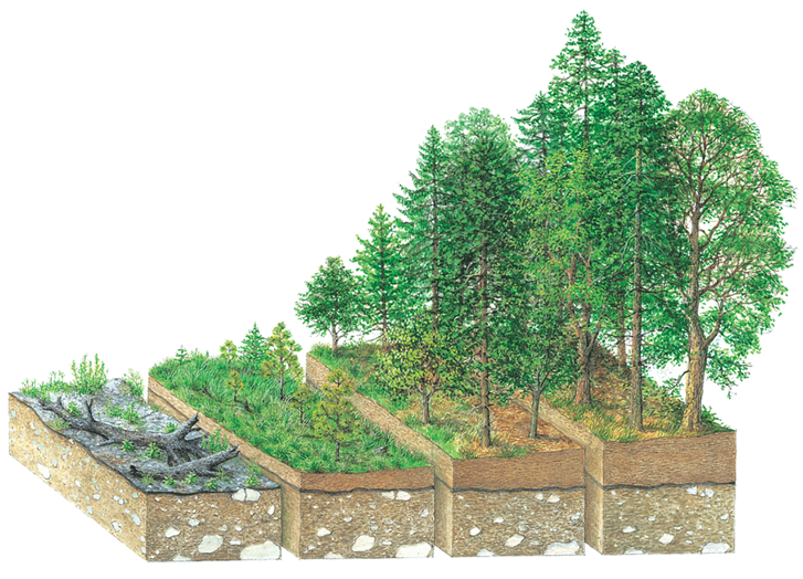 Secondary Succession aisbiology [licensed for non commercial use only] ecology
